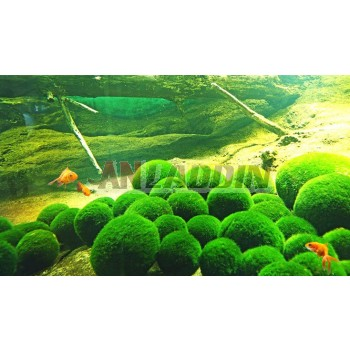 Fish tank Natural algae ball